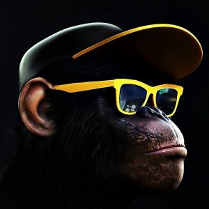 Cool Monkey Entertainment DJ