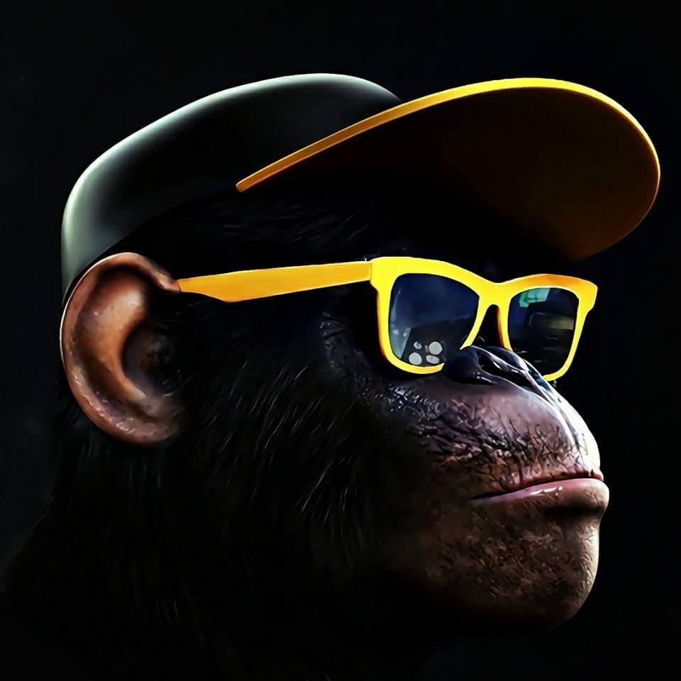 (1) Cool Monkey Entertainment